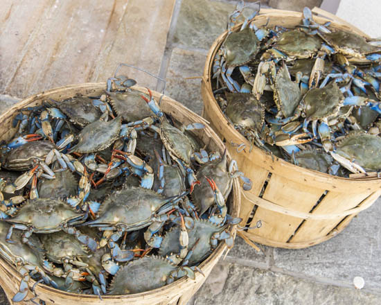 Camerons Seafood Rockville MD Blue Crab Bushels 2 550x440 - Cameron's Seafood, Rockville MD