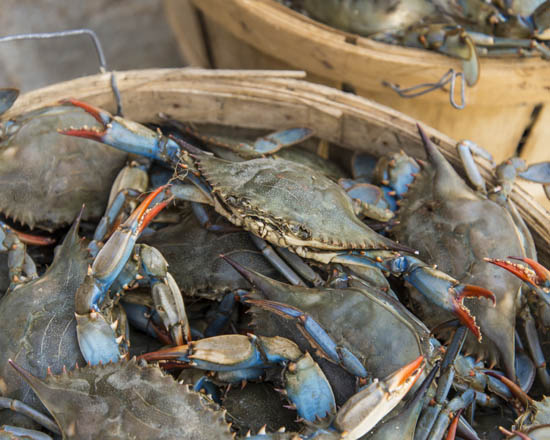 Camerons Seafood Rockville MD Female Blue Crab 550x440 - Cameron's Seafood, Rockville MD